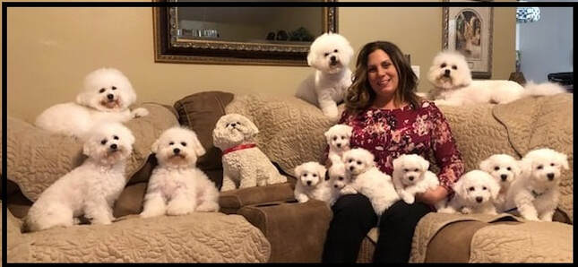 Family Raised Bichon Frise Puppies | The Blessed Bichons